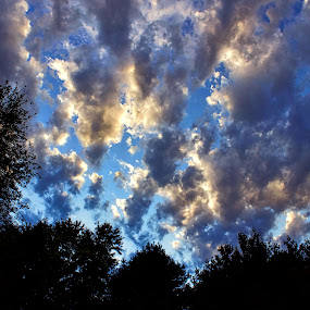 Blue Sky by Ty Shults - Landscapes Cloud Formations ( sky, blue, beautiful, white, trees, cloud, formation )