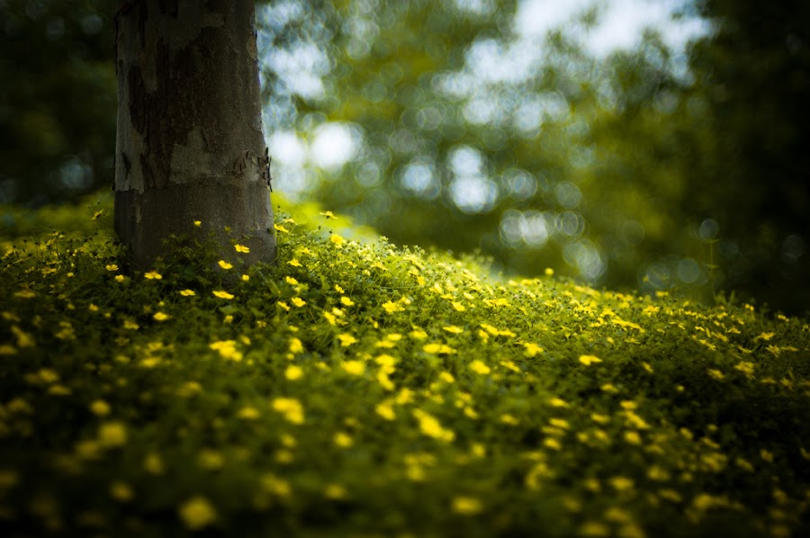 by Brooke Pennington - Nature Up Close Flowers - 2011-2013 ( tree, flowers )