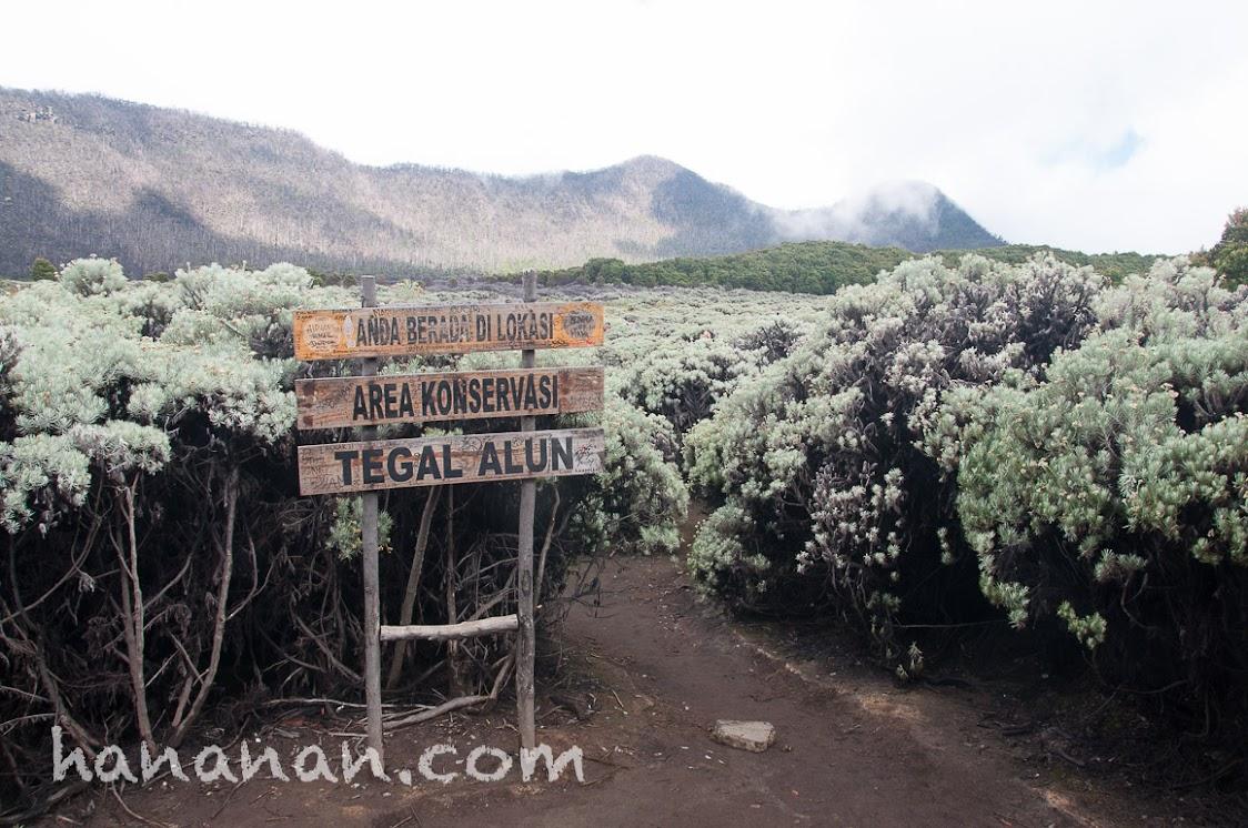 Tegal Alun sebagai area konservasi.