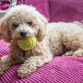 Play Ball with me. by Simon Page - Animals - Dogs Playing