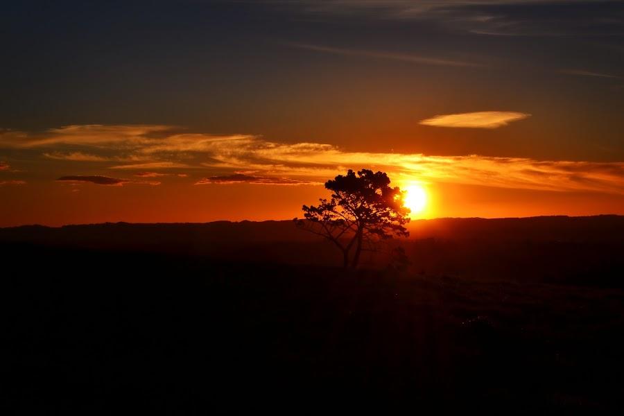 Stunning sunset... by Wendy Hornell - Landscapes Sunsets & Sunrises ( tree, sunset, beautiful, landscape, stunning )