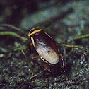 beetle/fly