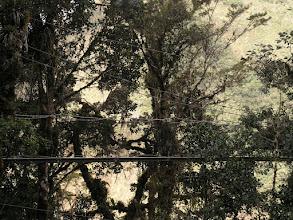Photo: Canopy walkway