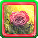 Roses icon