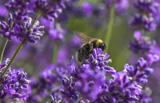 Zapylacze Nie Tylko Pszczoly Zapylaja Kwiaty