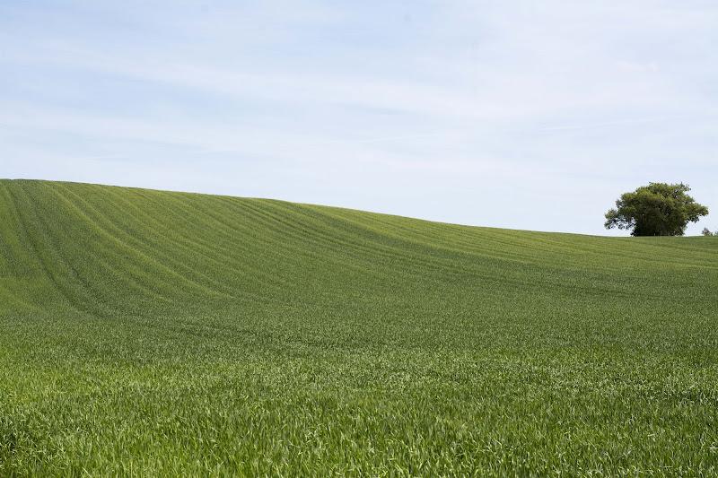 Il vento nel grano di Crouch