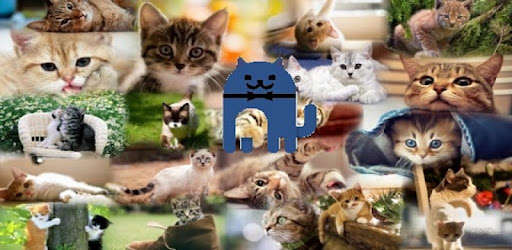 Cat pictures on the go !