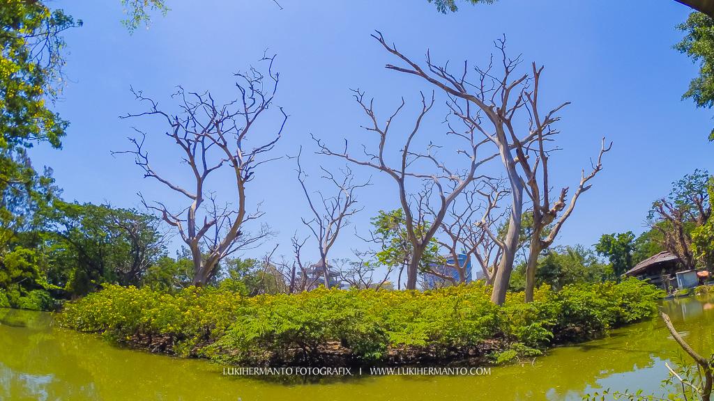 hasil foto kamera xiaomi yi indonesia surabaya