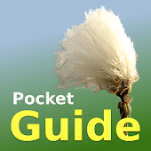 Pocket Guide UK Grasses