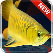 New Arowana Gold LiveWallpaper