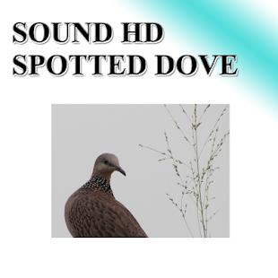 Big dove sounds to birds. - náhled