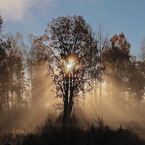 Sunrise in morningfog by Elisabeth Johansson - Landscapes Sunsets & Sunrises ( cold, tree, fog, dark, sunrise, sun, early )