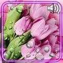 Fresh Tulips Live Wallpaper icon