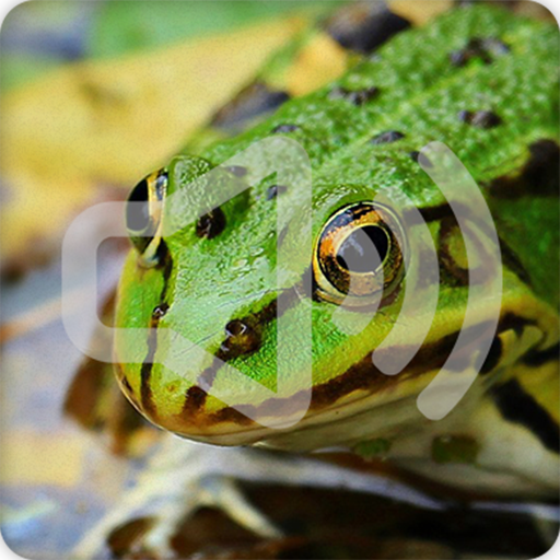 frog ringtone free download android