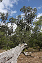 Photo: Tuart Forest NP