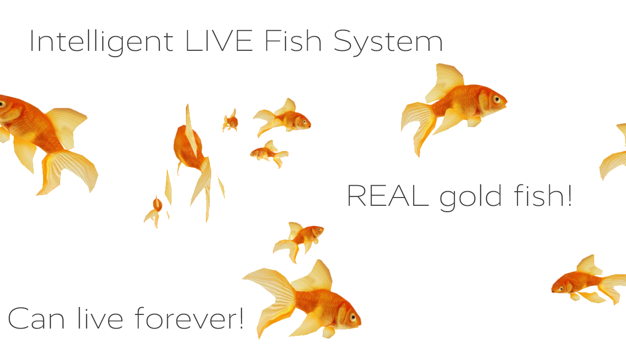 Gold fish real live wallpaper android apps on google play for Where do fish live