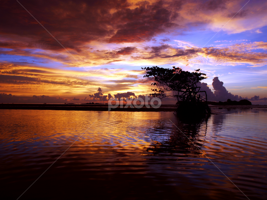 by Mohd Shahrizan Taib - Landscapes Waterscapes ( water, sky, zuiko lens, tree, blue, 14mm, e-30, sea, tripod, olympus )