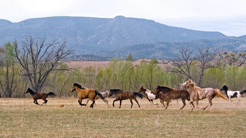 Watch America's Wild Frontier live