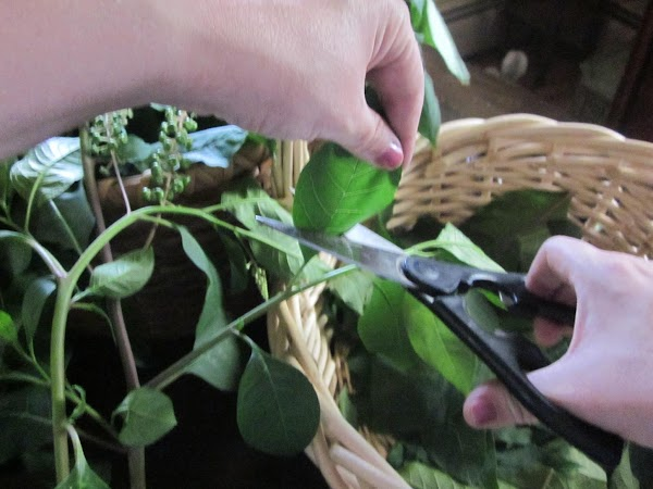 Cut just the leaves from stems.