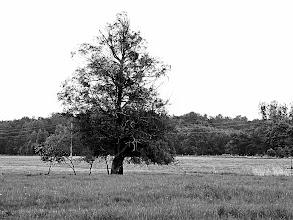 Photo: the last strong  #Tree  #Heide  #Powerline  #powerlinefriday  #blackandwhite