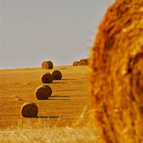 by Julie Zaranek - Landscapes Prairies, Meadows & Fields