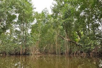 Photo: mangroves