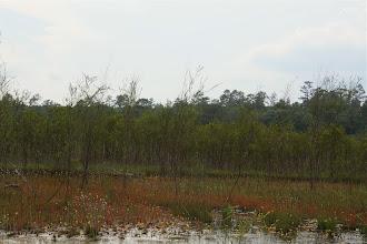 "Photo: Drosera filiformis ""Florida red"". Photo: Brian Barnes."