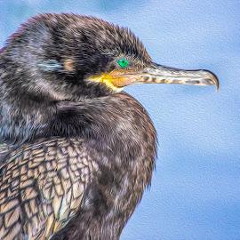 Cormorant  by Dawn Hoehn Hagler - Digital Art Animals ( tucson, arizona, reid park, bird, photoshop, oil paint, cormorant, digital art )