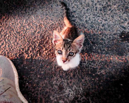 phobie des chats hypnose eaubonne val d'oise