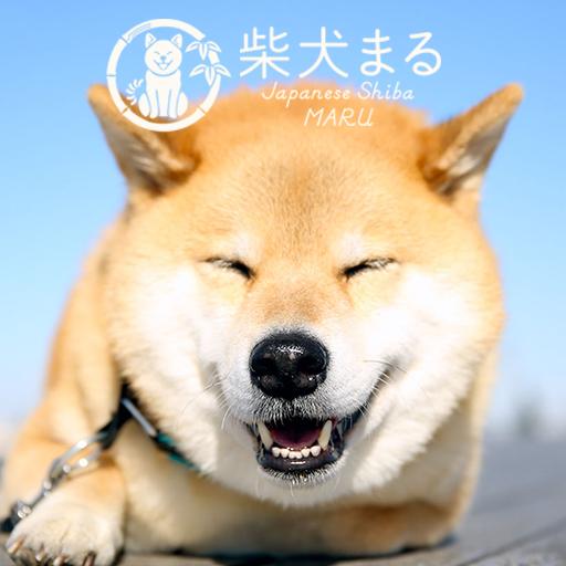 个人化の柴犬まるのお散歩 +HOMEきせかえテーマ LOGO-HotApp4Game