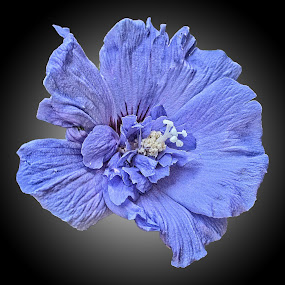 CPI flower 10 by Michael Moore - Flowers Single Flower (  )