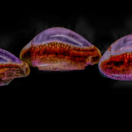 Altered Threesome by Dave Walters - Digital Art Abstract ( nature, seashell, lumix fz2500, abstract, colors, digital art,  )