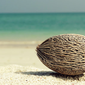 Tropical Treasure by Priyanka Nayar - Nature Up Close Other plants ( andaman, sand, coconut, ocean, beach, surf )