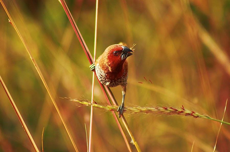 by Juliyan Jacob - Animals Birds