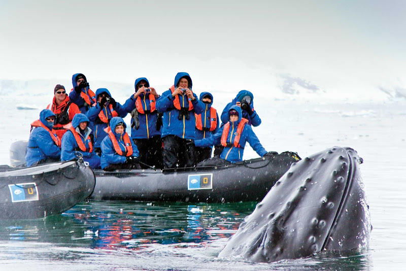 Adventure travelers on a Lindblad Expeditions trip see a humpback whale breach the surface near the Antarctic Peninsula.