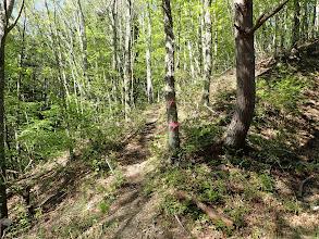 林道の対面に道が続く