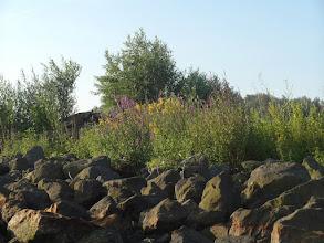 Photo: mooi begroeide oevers