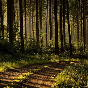 by Jana Černošková - Landscapes Forests ( forest,  )