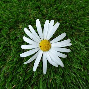 by Sean Parker - Flowers Single Flower (  )
