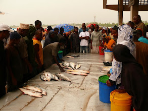 Photo: Rybí aukce na trhu v Dar es Salamu / The Auction on fish market in Dar es Salam