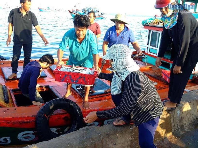 Sáng sớm những chiếc tàu cập cảng mang theo những mẻ cá tươi ngon.