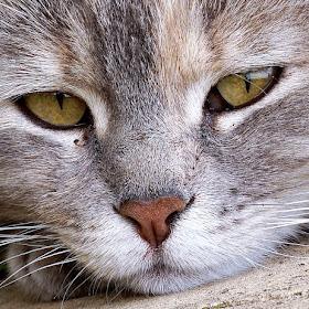 maca iz toplca 6.jpg