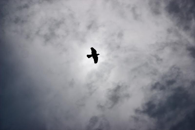 Il Volo del gabbiano di arcagraphy
