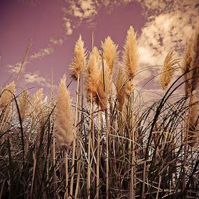 Outono by Zulmira Relvas - Landscapes Prairies, Meadows & Fields (  )