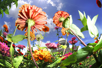 Photo: Just another trippy flower pic....  #arkansas  #arkansasphotographer