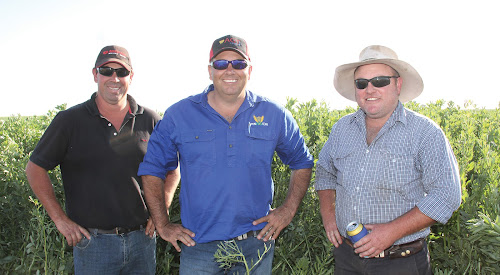 Field Day brings growers up to  date on varieties, challenges