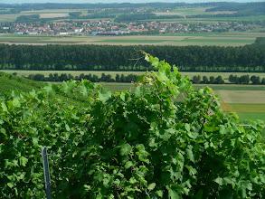 Photo: Plaine de l'Orbe depuis le vignoble d'Arnex. Au fond le village de Chavornay