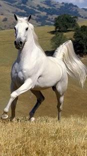 Kůň Živé Tapety - náhled