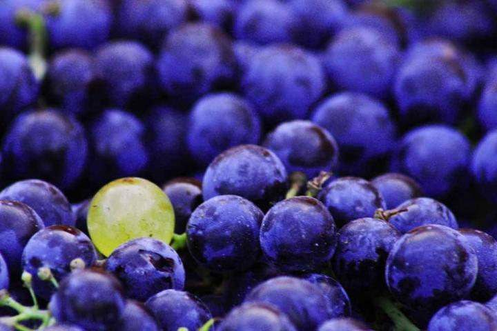 L'uva non è razzista... di Sara Imbesi
