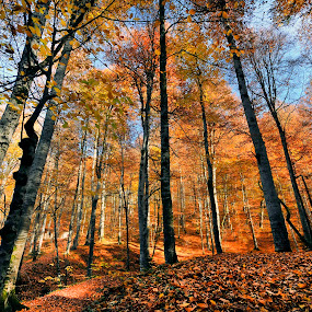 Autumn.. by Mustafa Tor - Landscapes Forests ( national park, national geographic, autumn, yellow, turkey )